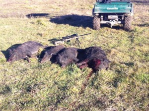 helicopter hog hunting dallas with Hog Hunting on Page 98 likewise Joining 2 Different Crown Moldings 45230 together with Watch additionally  additionally Hog Hunting.
